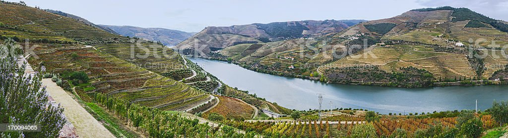 Terraced vineyards in autumn royalty-free stock photo