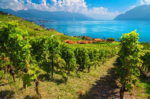 Terraced vineyards in Lavaux region near Chexbres village, Vaud, Switzerland