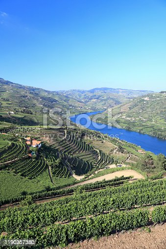 Terraced vineyards on banks of River Douro in Portugal