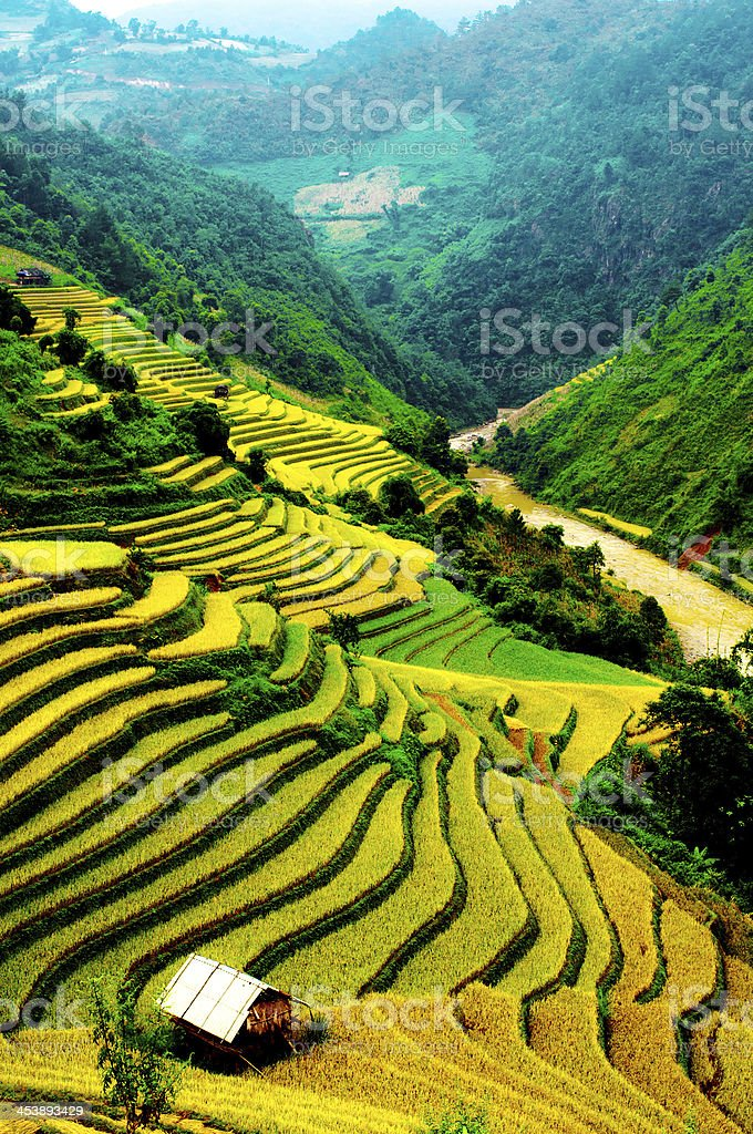 Terraces of rice field in northwest Vietnam The rice fields on the mountains of the H'mong ethnic minority in the northwestern region of Vietnam Agricultural Field Stock Photo