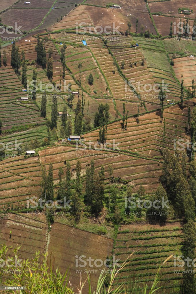 Terracing Rice Fields In Malang City Indonesia Stock Photo Download Image Now Istock