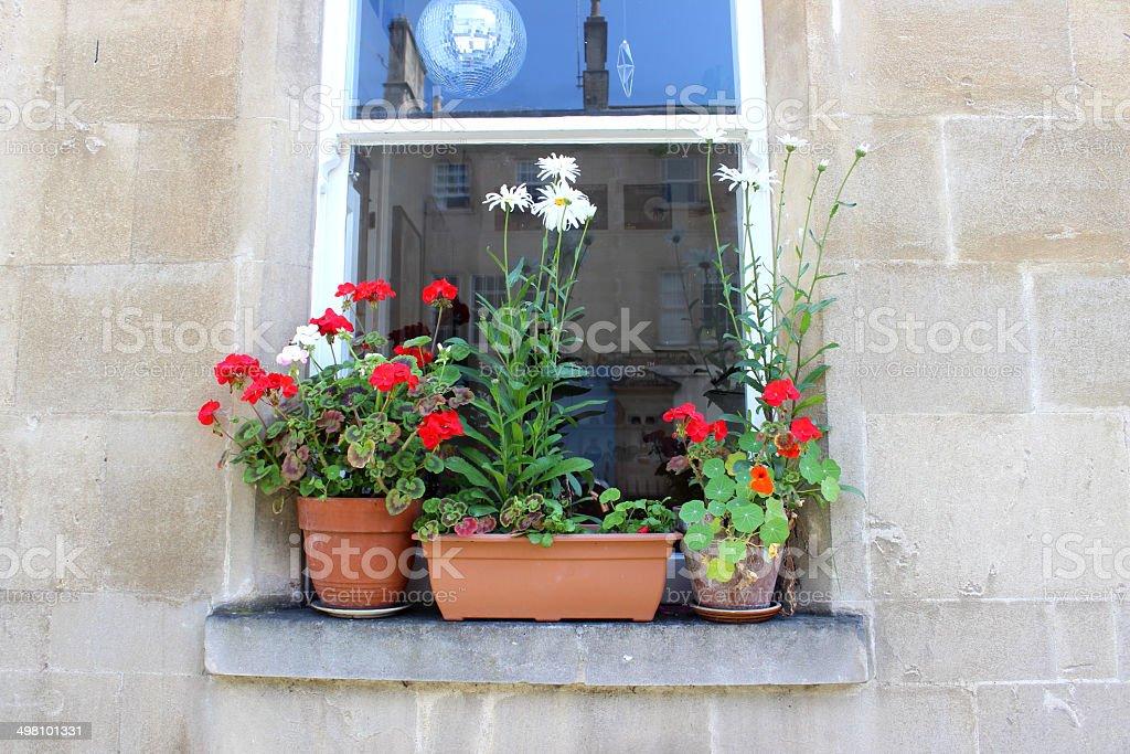 Terracotta pots of annual flowers growing on windowsill in summer stock photo