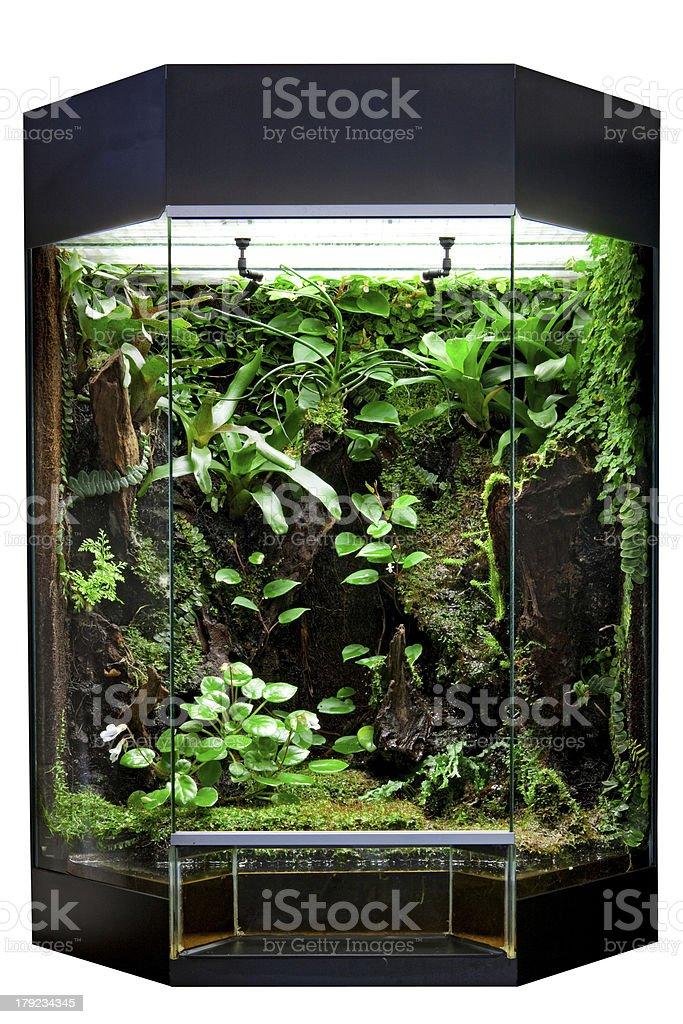 terrarium for tropical rainforest pets stock photo