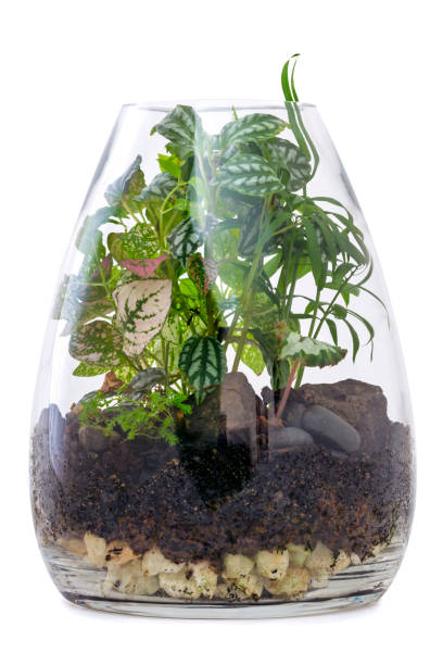 terrarium garden isolated on white - terrarienpflanzen stock-fotos und bilder