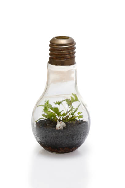 terrarium in bulb shape. - terrarienpflanzen stock-fotos und bilder