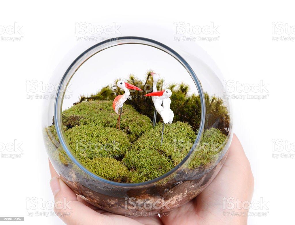 Terrarium in hands. stock photo