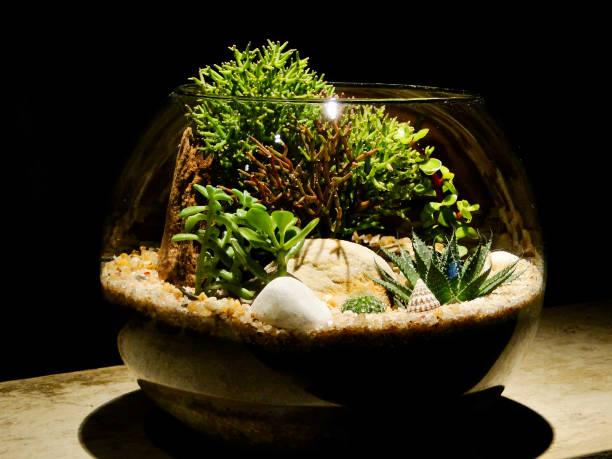 Terrarium stock photo
