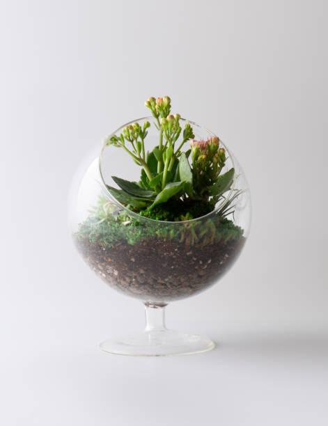 terrarienanlage isoliert weißen hintergrund mini-garten - terrarienpflanzen stock-fotos und bilder