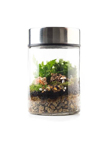 terrarium plant mini garden in bottle stock photo