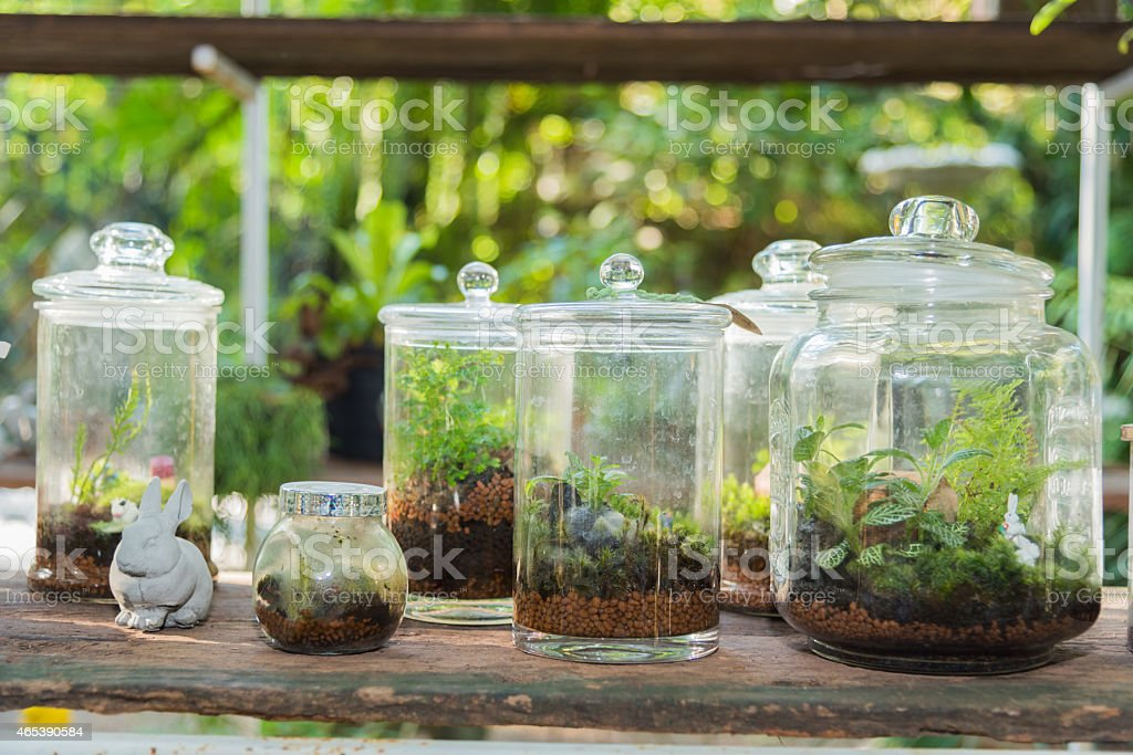 Terrarium, small tree in a bottle stock photo