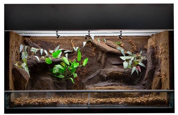 도마뱀과 독 다트 개구리와 같은 열 대 정글 동물을 지키는 테라 리 움 - 파충류 뉴스 사진 이미지