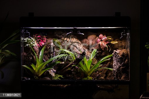 Tropical terrarium or pet tank for frogs