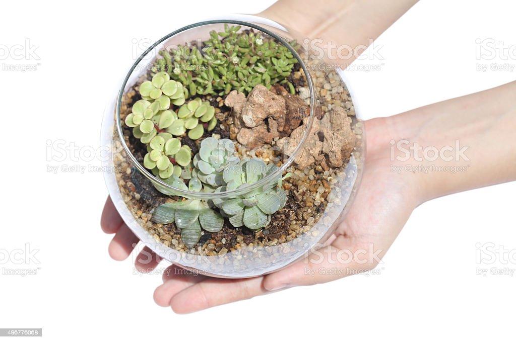 Terrarium tree jar in hand on white background stock photo