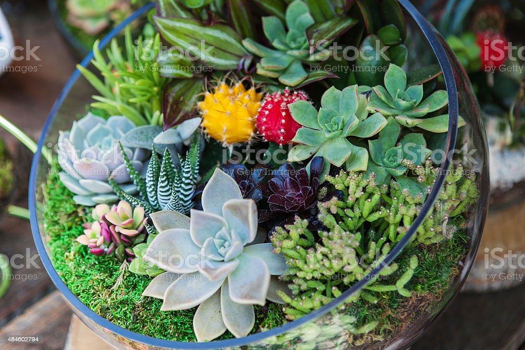 Terrarium with cactus succulent plant stock photo
