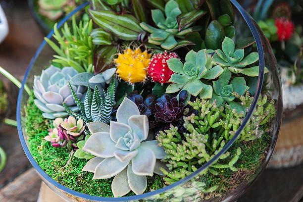 terrarium mit sukkulente kaktus - terrarienpflanzen stock-fotos und bilder