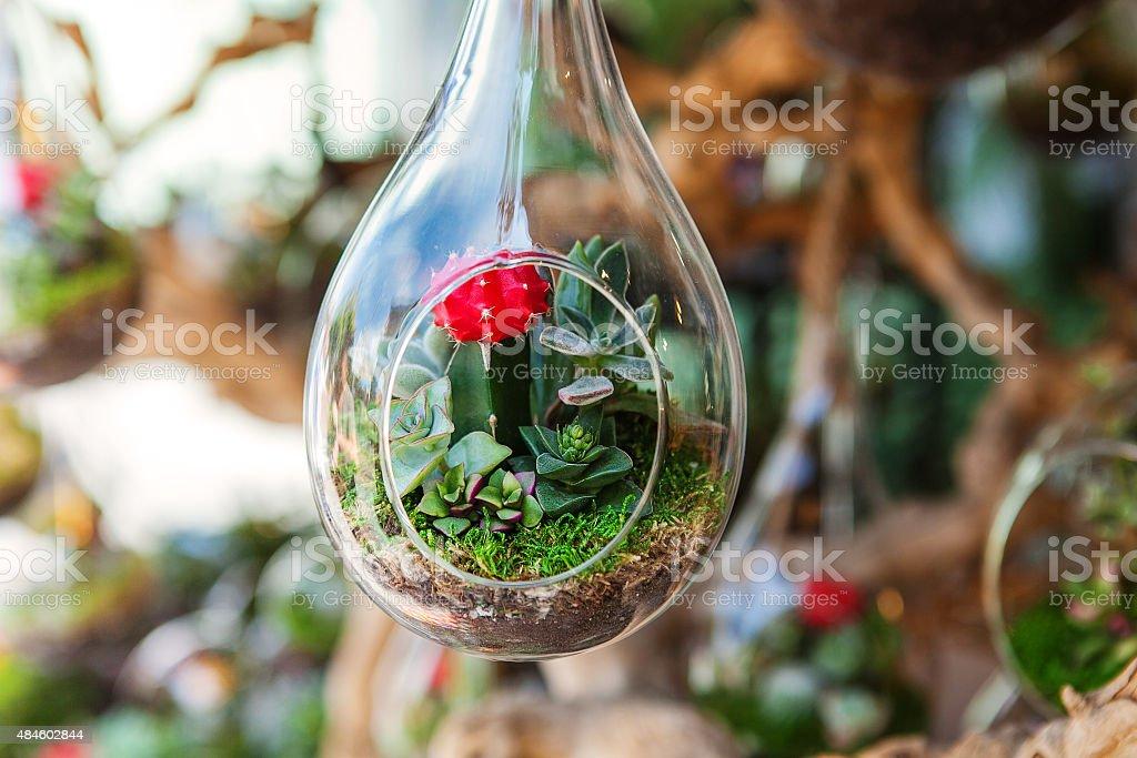 Terrarium with succulent plant stock photo