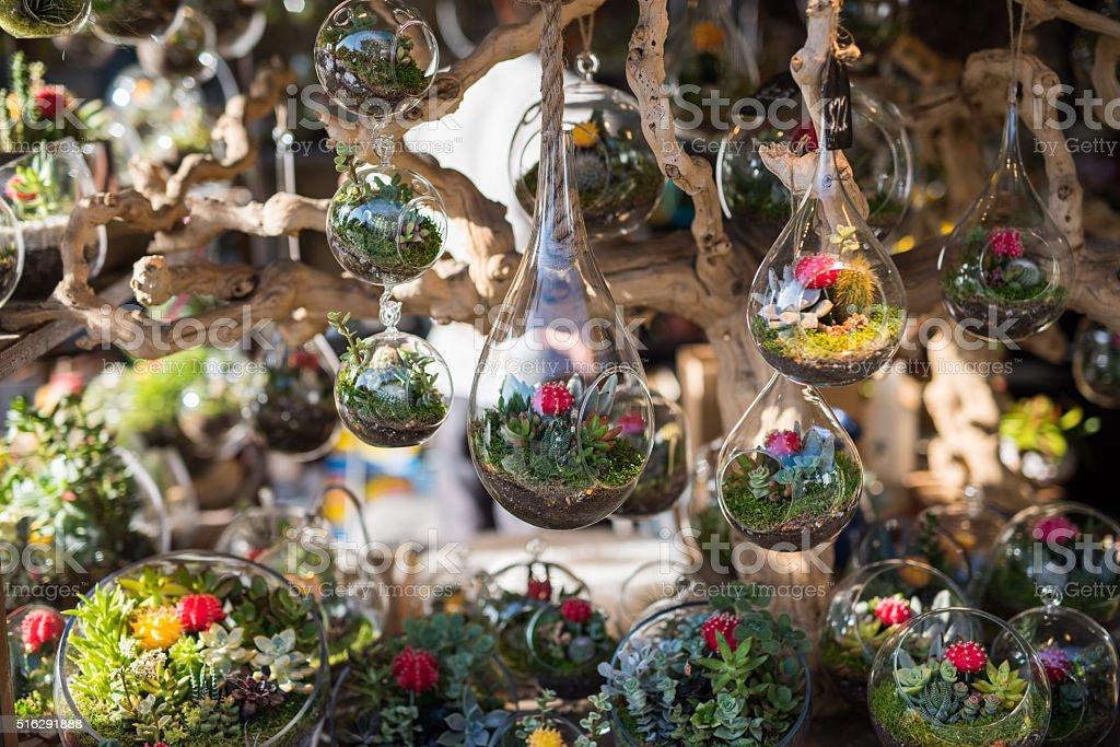 Terrariums inside glass jars. stock photo