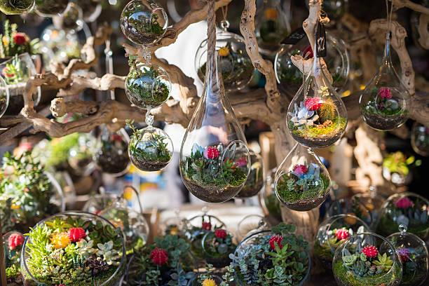 terrarien in glas jar. - terrarienpflanzen stock-fotos und bilder