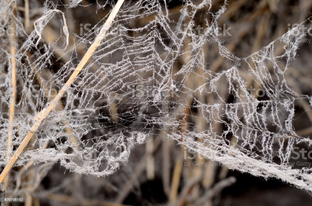 A terrible spider web in the barn stock photo