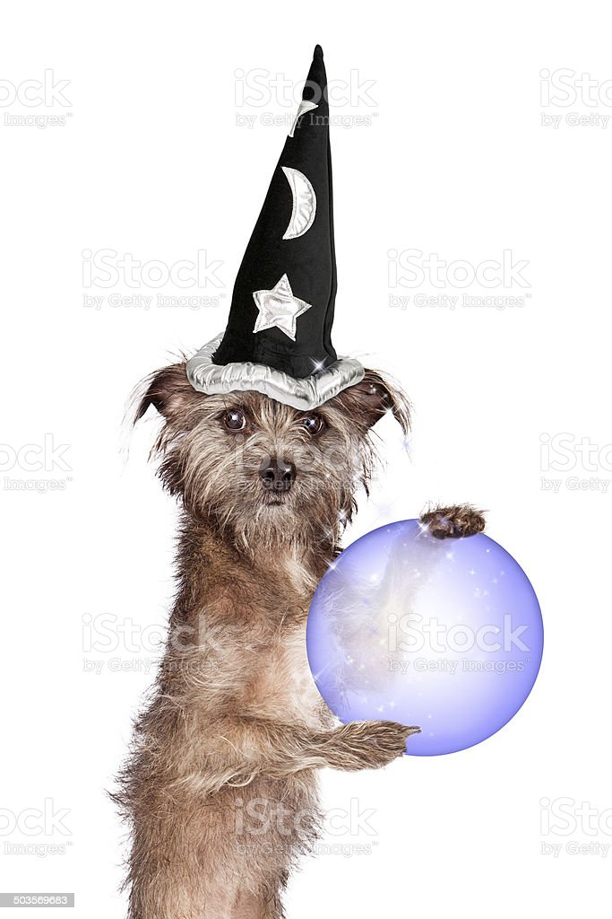 Terrier Dog Fortune Teller stock photo