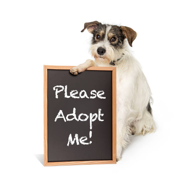 Terrier Dog Holding Adopt Me Sign stock photo