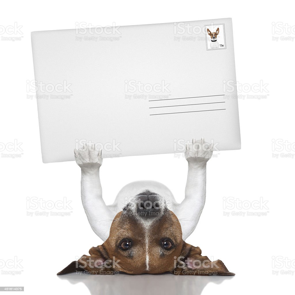 Terrier dog on his back, holding a blank mailing envelope stock photo
