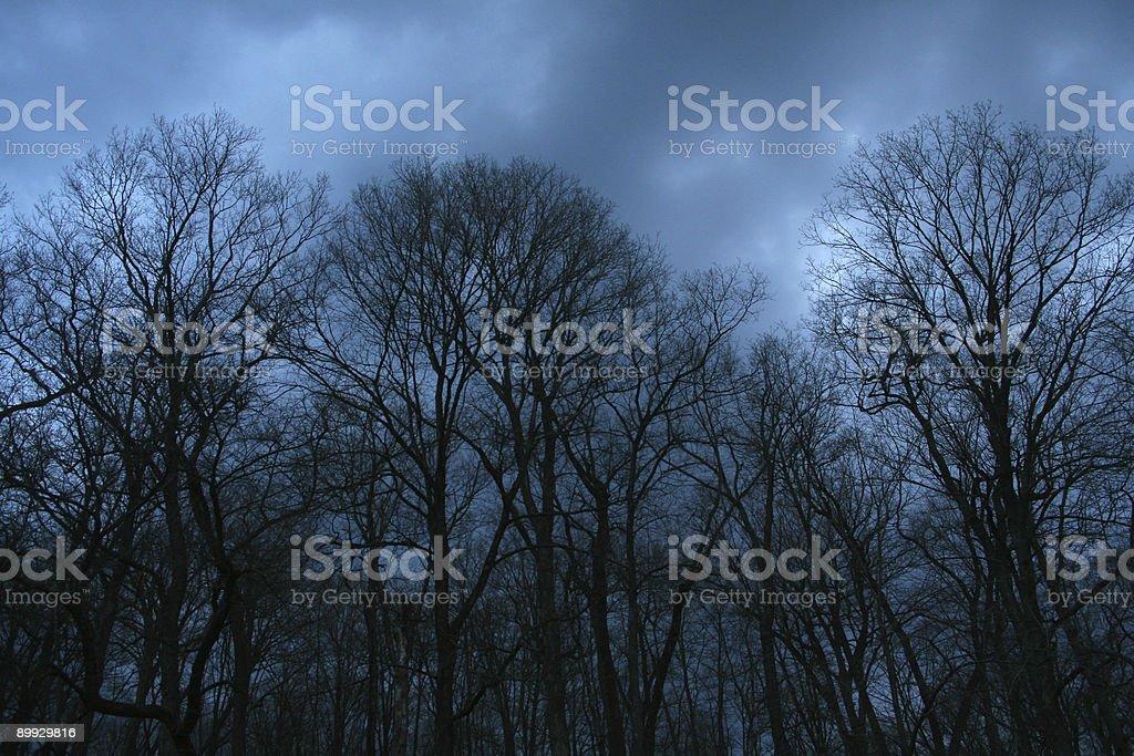 Terror Trees, Dubuque County Iowa royalty-free stock photo