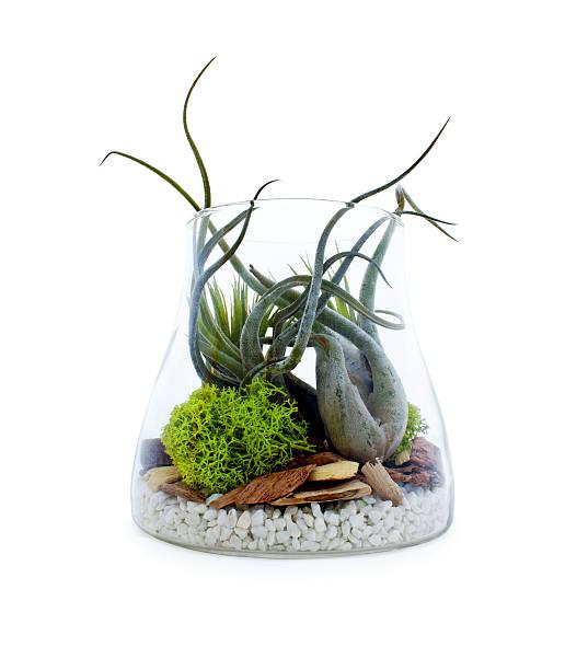 Terrrarium display in glass container stock photo