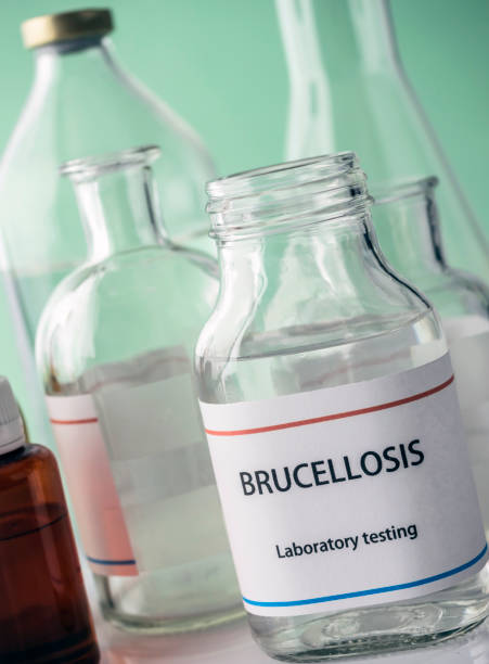 Test brucellosis in laboratory, conceptual image, composition horizontal stock photo