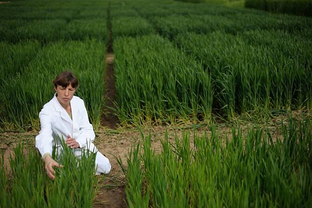 Test field Bereich plant breeding – Foto