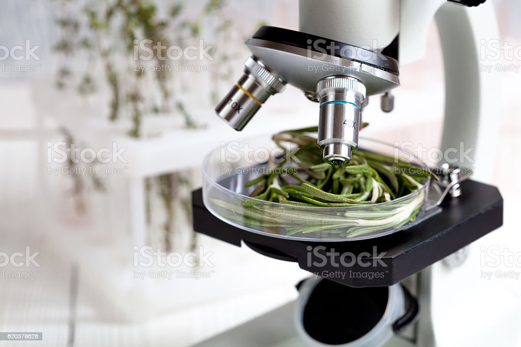 test herbs samples on microscope in laboratory zbiór zdjęć royalty-free