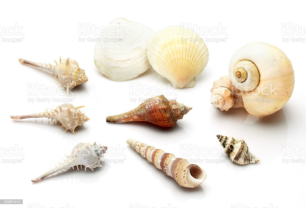 Testacean,variety of seashell in white background. stock photo