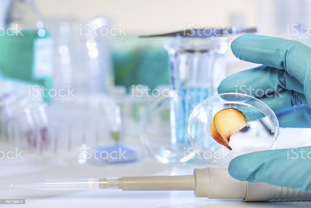 Testing fruits for pesticides stock photo