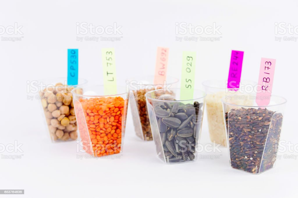 Testing gmo products stock photo