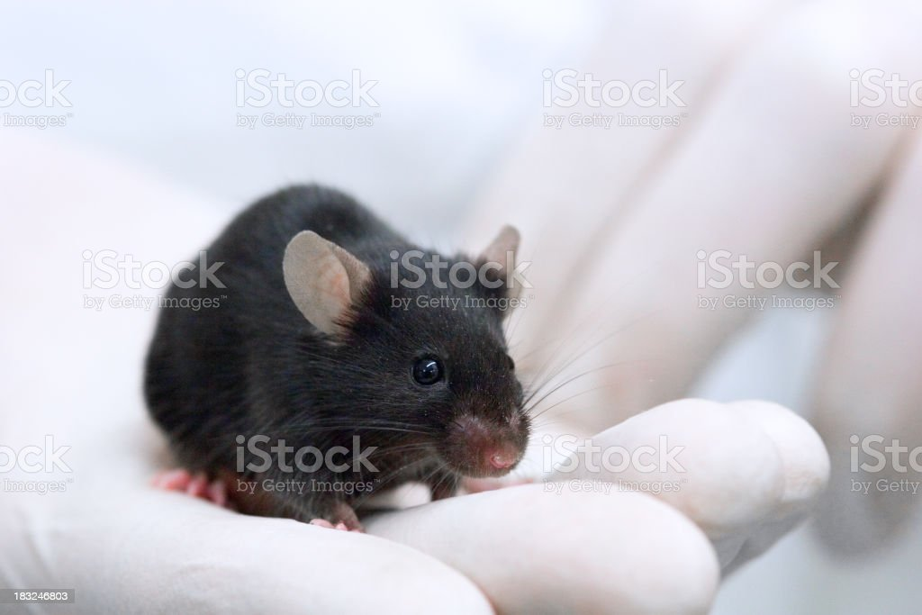 Testing on animals royalty-free stock photo