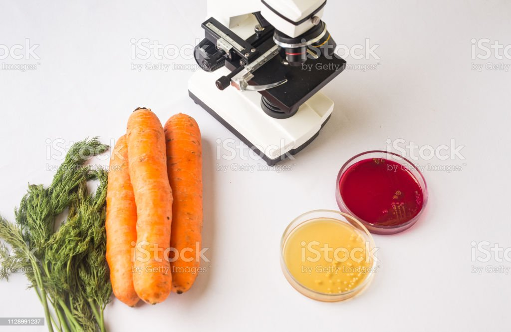 Testen rohes Gemüse für Escherichia coli und Staphylococcus – Foto
