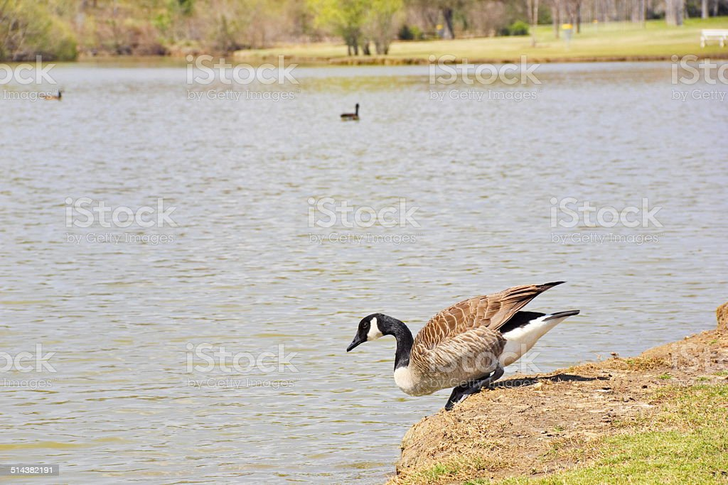 Testing the Water on a Warm Spring Day stock photo