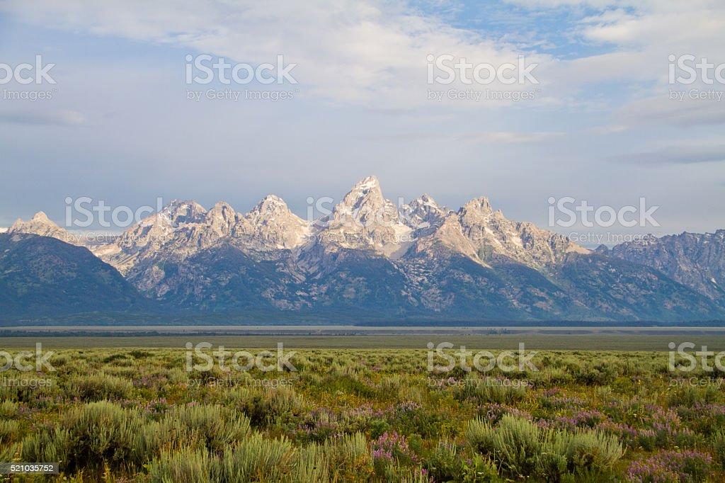 Teton Range and Lupine II stock photo