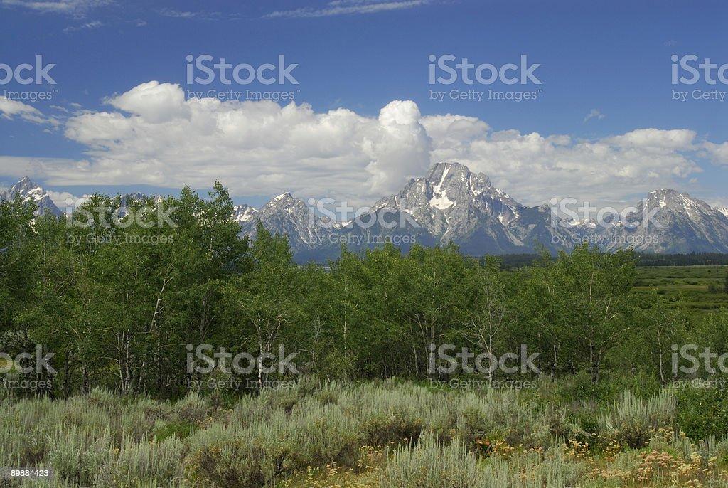 Teton View in Summer royalty-free stock photo