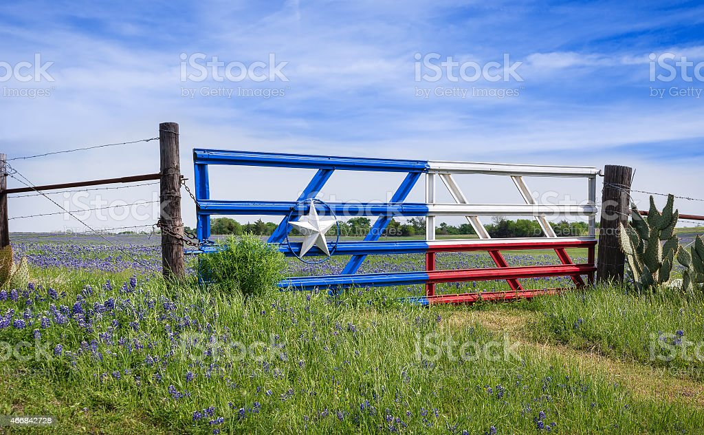 Texas bluebonnets along a fence in spring stock photo