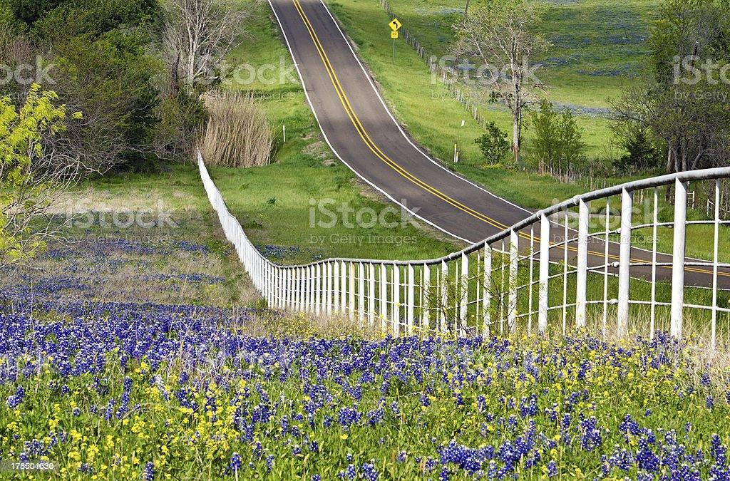 Texas bluebonnets along the road side stock photo
