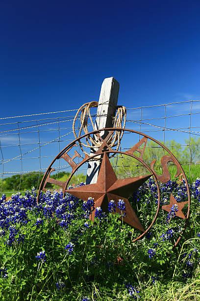 texas bluebonnets - bluebonnet stock photos and pictures