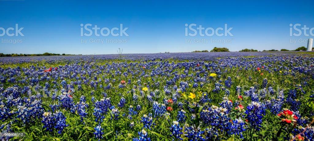 Een Texas veld vol van verschillende Wildflowers met inbegrip van Texas Bluebonnets. - Royalty-free Biennial Stockfoto