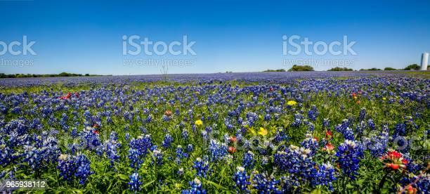 En Texas Fältet Full Av Olika Blommor Inklusive Texas Bluebonnets-foton och fler bilder på Betesmark