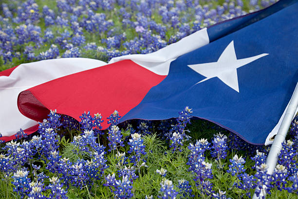 Texas flag among bluebonnet flowers on bright spring day stock photo