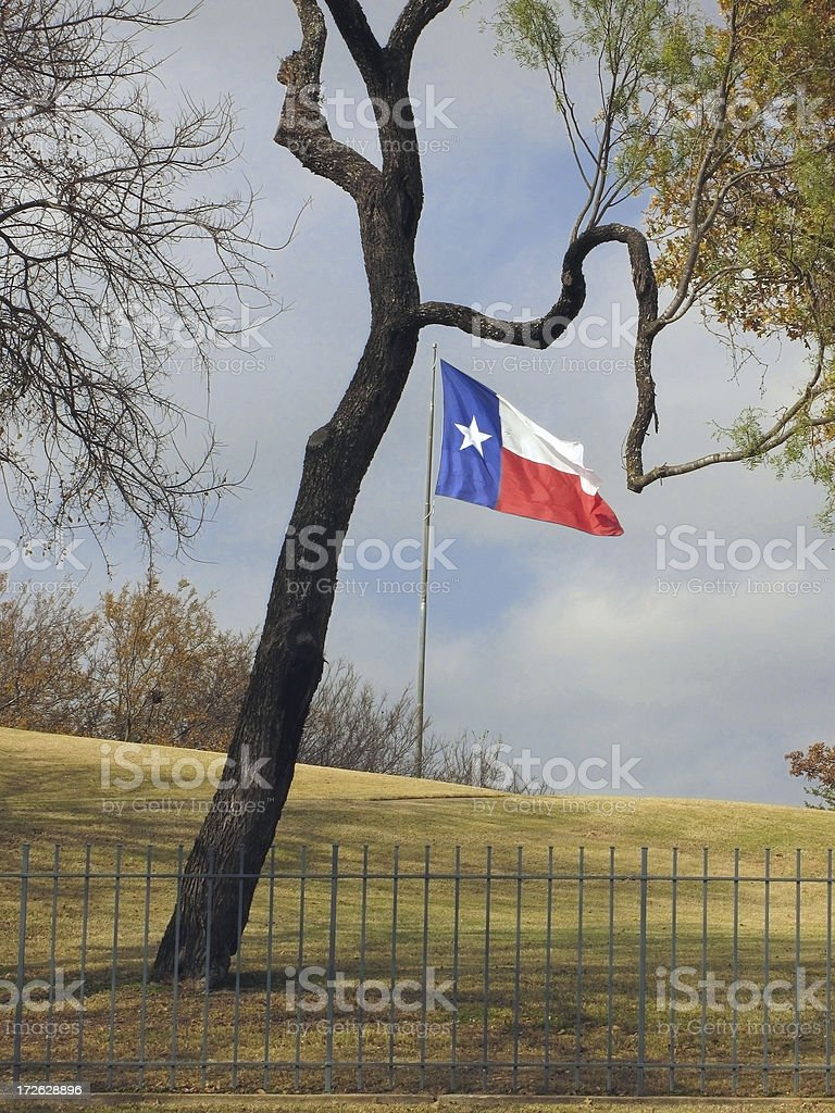 Texas flag framed by mesquite tree stock photo