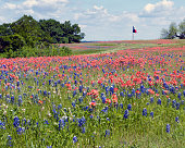 Red White and Blue Meadow matches Texas Flag in the wind.
