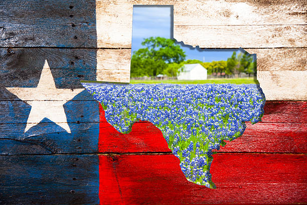 texas flag, state cut out with bluebonnet flowers. - bluebonnet stock photos and pictures