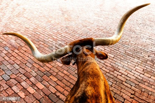 Texas Longhorn cattle. Location is Fort Worth, Texas.
