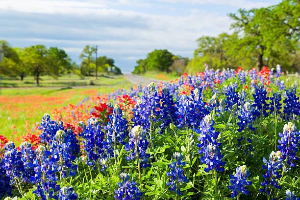 Texas wildflowers awash in morning sunshine stock photo